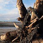 Ephemera #1 (Fishing Net on Tree Stump, Sangan River, Naikoon Park, Haida Gwaii, British Columbia, Canada, November 2009) by Edward A. Lentz