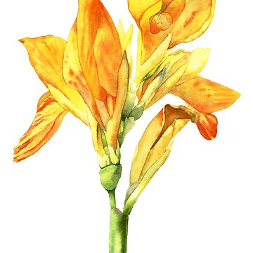 Golden Canna Flower Watercolor Painting by namibear