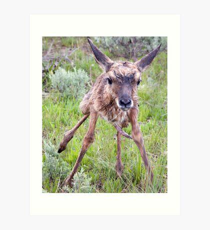 Teetering Antelope Fawn Art Print