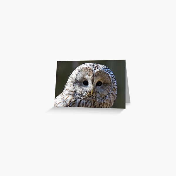Ural Owl giving the funny look Greeting Card