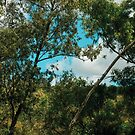 «Una ventana en el bosque» de GemAysh
