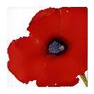 Big Poppy by Helen Dannelly