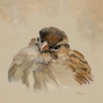 Bird: House Sparrow by bamalam-art