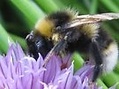 chive bee by millymuso