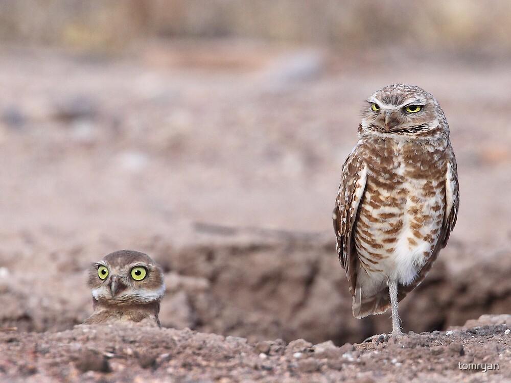 Burrowing Owls by tomryan