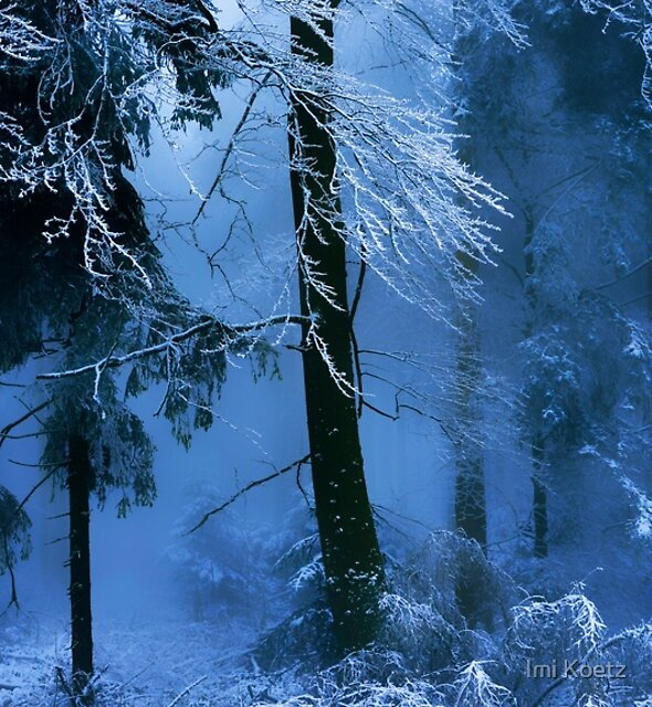 Magical Black Forest by Imi Koetz