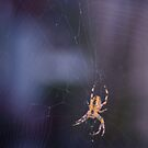 Like a spider in the web by steppeland