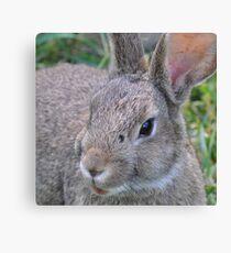 el Bunny Bandito Canvas Print