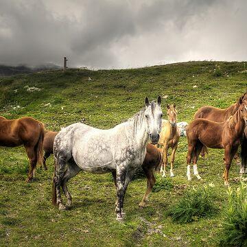 White horse by birba