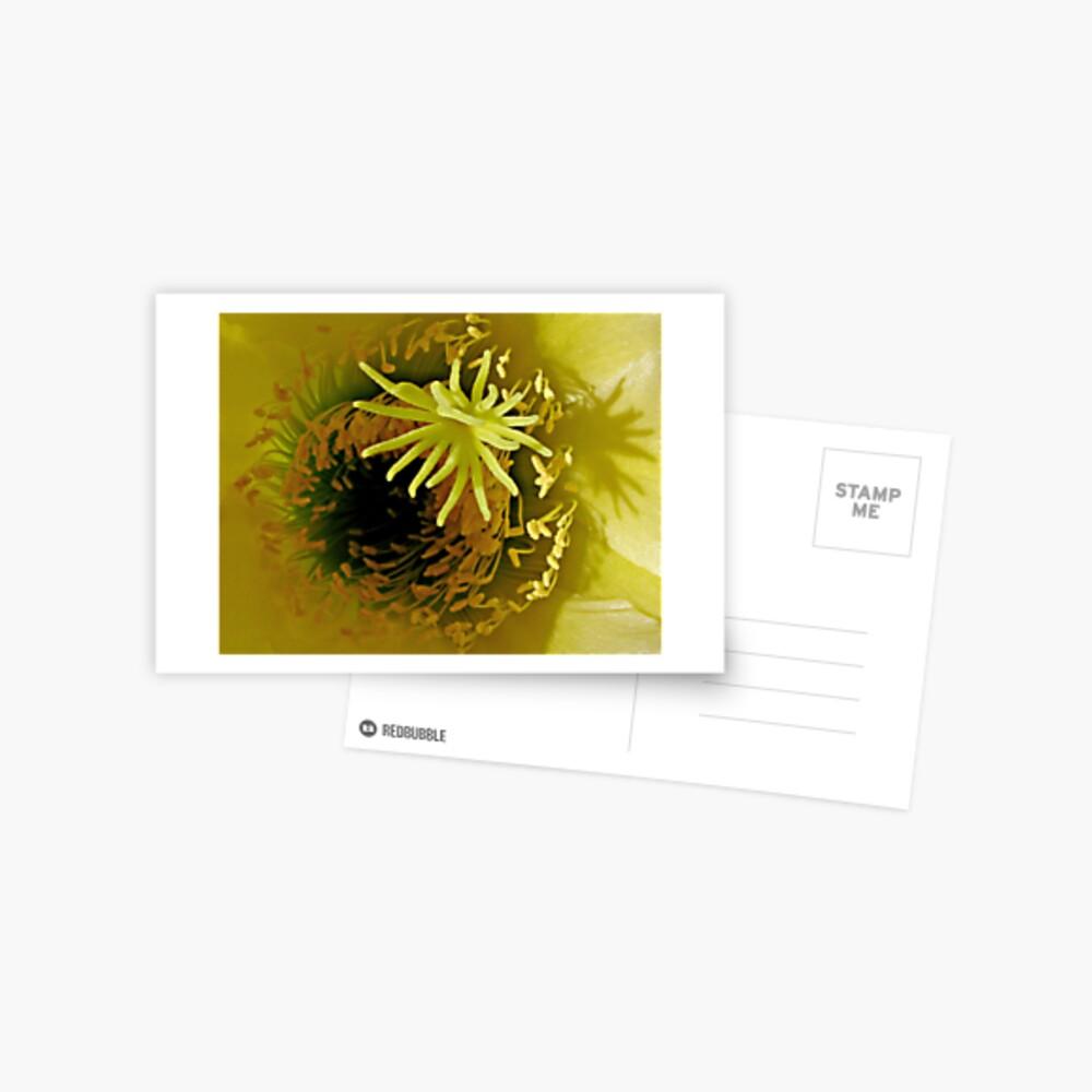 Yellow Cactus Flower Postcard