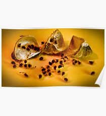 Seedling Pods (hibiscus ) Poster