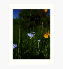 Water Forget-me-not (Myosotis scorpioides) Art Print