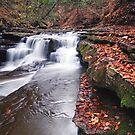 Fallen Leaves by BigD