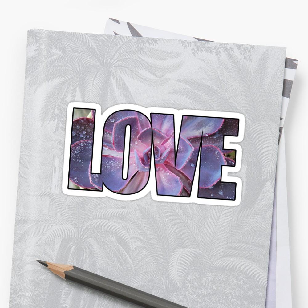 Echeveria Love by 416studios