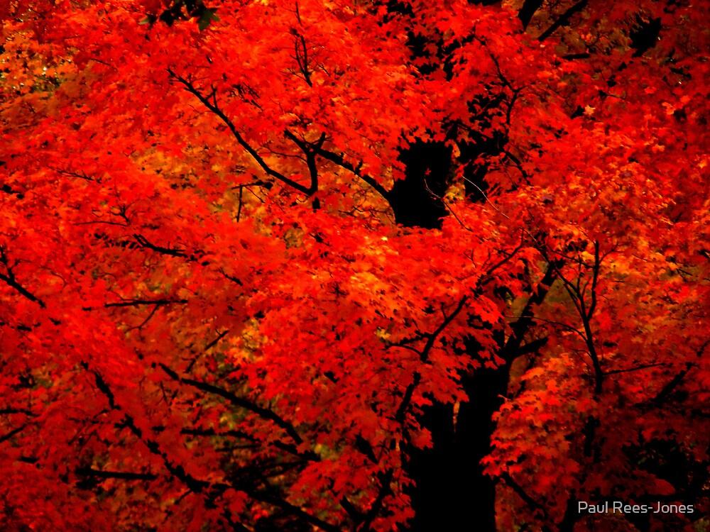 Evening Fire. by Paul Rees-Jones