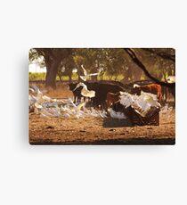 Cattle & Cockatoos in the Australian Bush Canvas Print