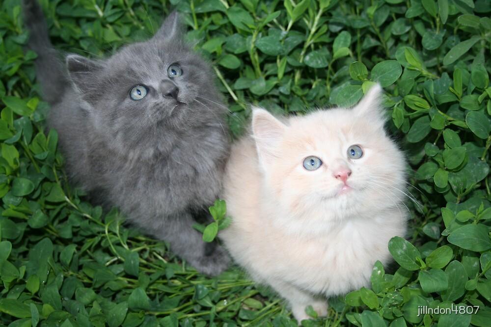 Cute kitties by jillndon4807