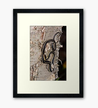 WT 14 Tree Trunk Ornament Framed Print