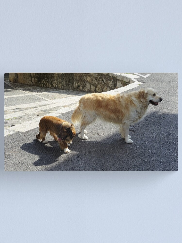 Alternate view of Cutie dogs looking for their owner Canvas Print