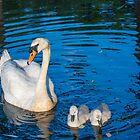 Mother Swan by LudaNayvelt