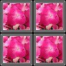 Pink hydrangea closeup by Joan Harrison