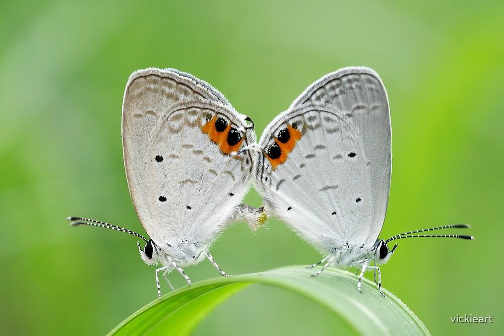 butterflies by vickieart