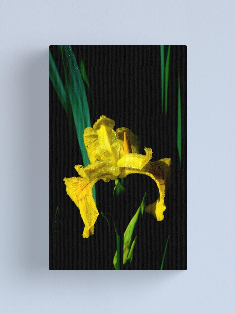 Alternate view of Riparian Iris Canvas Print