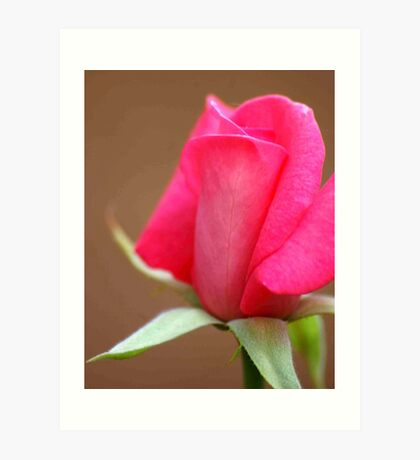 PERFECT IN PINK Art Print