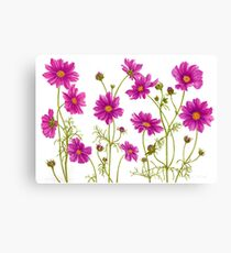 Hot Pink Magenta Cosmos Flowers Canvas Print