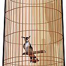 Hanoi Birdcage by Sabrina Pinksen