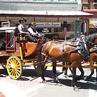 Horses And Buggy by Laura Puglia