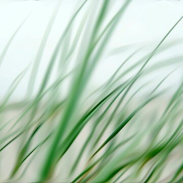 Abstract dune grass Terschelling Friesland by stuwdamdorp