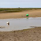 Doggy Paddle by John Thurgood