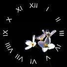 Cardamine Pratensis Flowers White Roman Numbers Wall Clock by Alan Harman