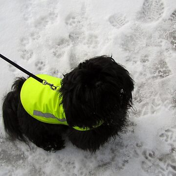 shih tzu winter by PVagberg