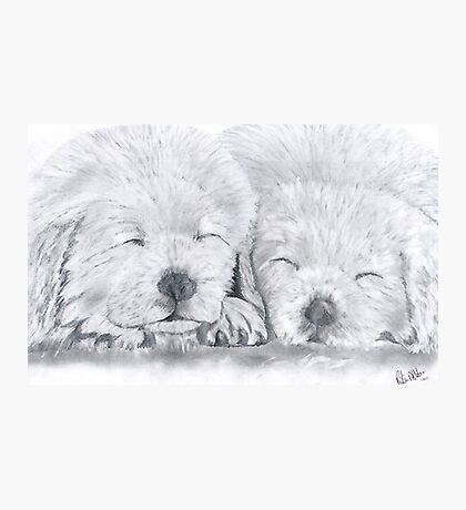 snooze brothers. Photographic Print