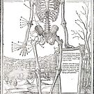 Anatomical skeleton illustration from De dissectione partium corporis humani libri tres published circa 1545 (Cleaned to remove bleed thru text) by artfromthepast