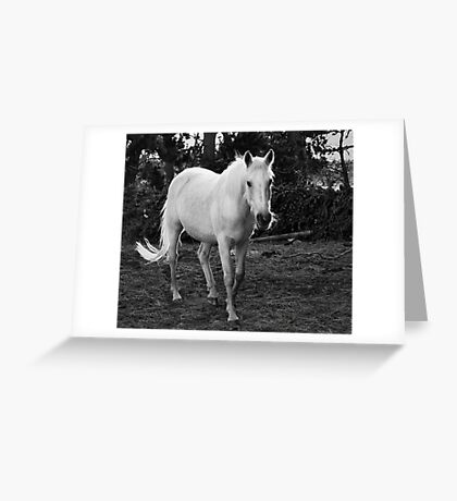 White Pony Greeting Card