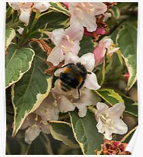 Bumble in the Flowers Poster