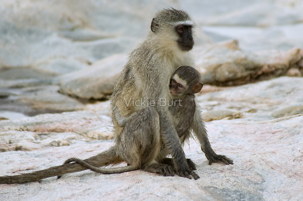 Safe in mum's arms by Vickie Burt
