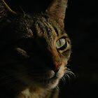 Majestic Feline by Nerone