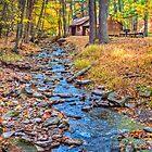 Woodland Stream by Viv Thompson