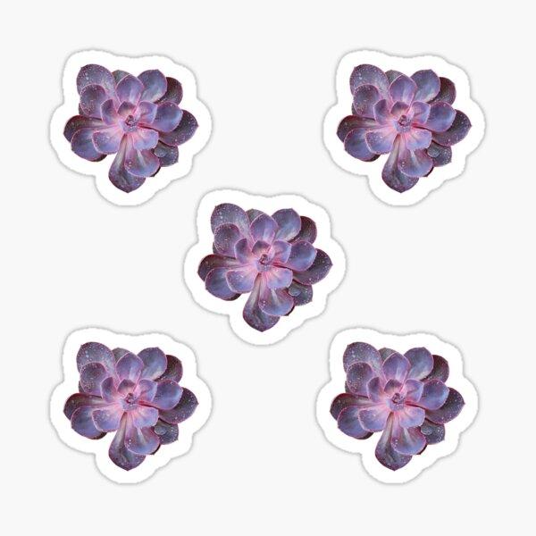 Purple Pearl (beige background) Sticker