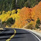 Autumn Highway – Luther Pass, Alpine County, CA by Rebel Kreklow