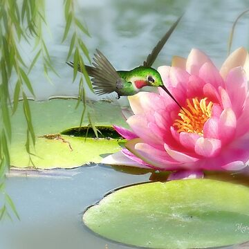 Hummingbird & Water Lily by MoragBates