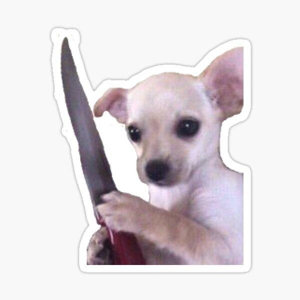 Dangerous Chihuahua  Sticker
