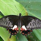 Butterfly 4 by WhiteDiamond