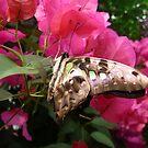 Butterfly 3 by WhiteDiamond