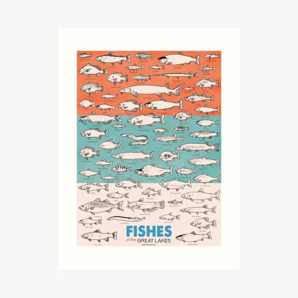 Fishes of the Great Lakes Art Print