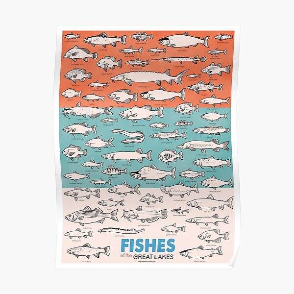 Fishes of the Great Lakes Poster